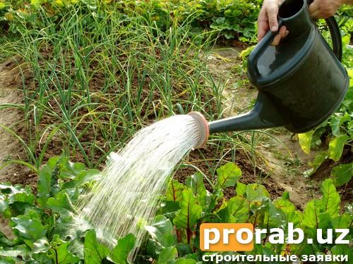 Рекомендации по поливу огорода