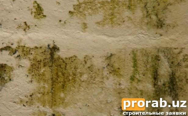Защита поверхностей от грибка, плесени и огня